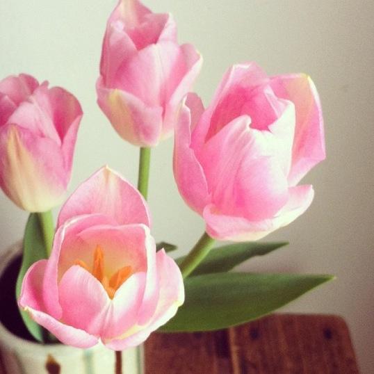 tulipppa.jpg